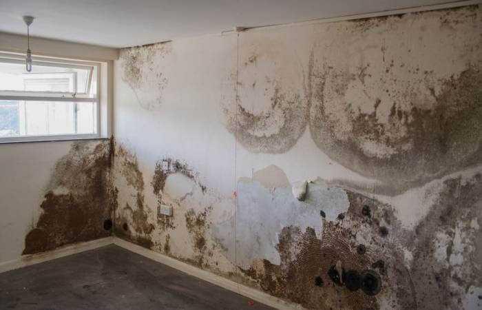 Một số nguyên nhân dẫn đến ẩm mốc tường nhà